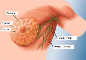 деготь березовый применение внутрь от паразитов