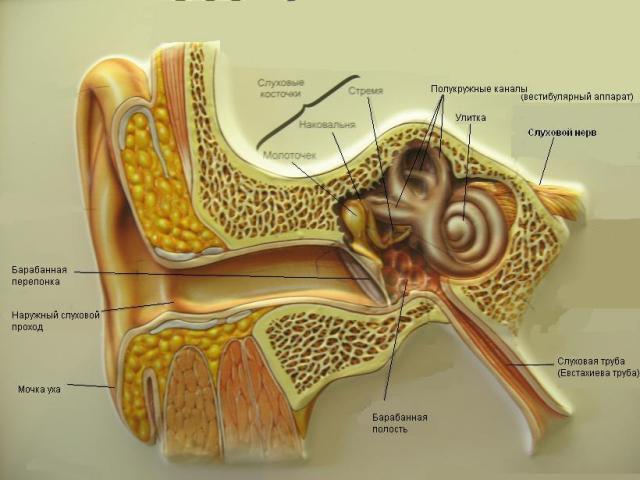 Отит, воспаление уха