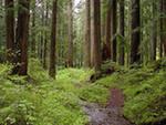 лес и здоровье